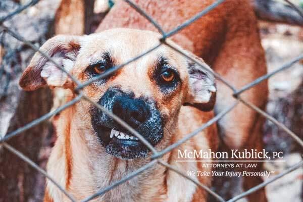 Syracuse NY Dog Bite Injury Attorney